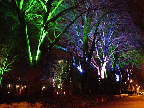 What Is Outdoor Led Tree Uplighting